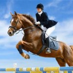 showjumping horse and rider