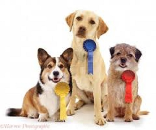 Rosettes for dogs