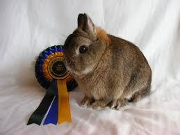 Rosettes for Rabbits